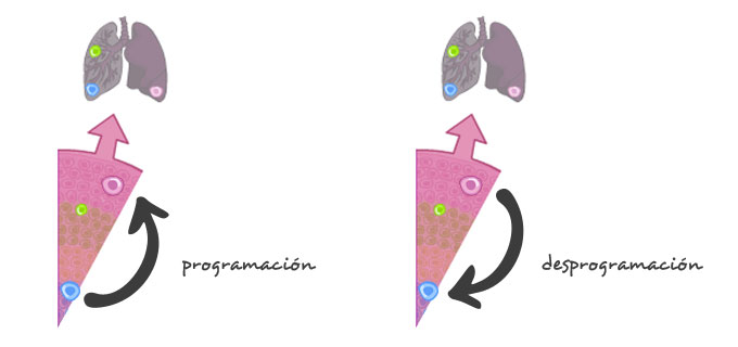 celulas-madre-desprogramacion_es