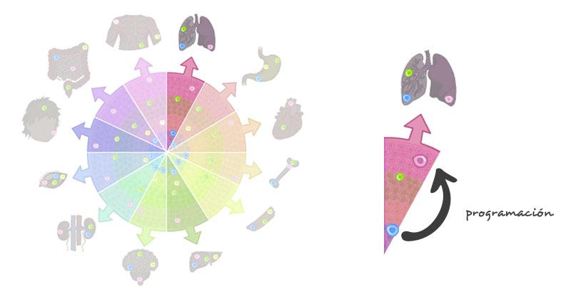 Inducidas celulas pdf pluripotentes