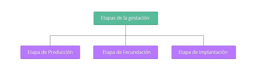 esquema-tecnicas-reproduccion01.es