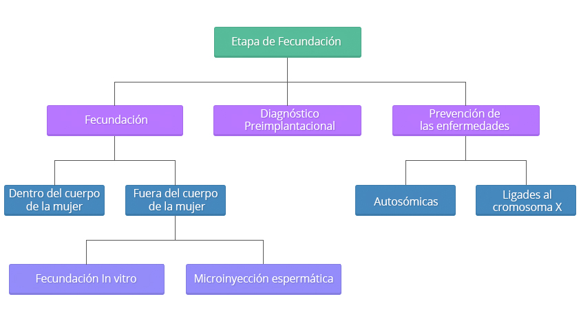 esquema-tecnicas-reproduccion02.es