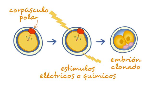 laclonacion01c.es