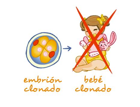 La clonación y las células madre | La genética al alcance de todos ...
