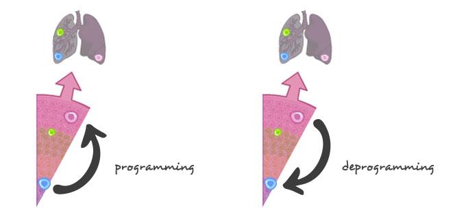 celulas-madre-desprogramacion_en